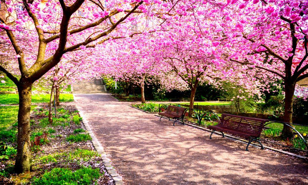 Primavera alimentazione corretta e lotta alla for Immagini desktop primavera
