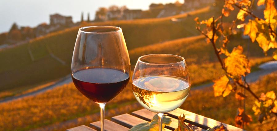 I geni degli italiani sono allenati al gusto del buon vino