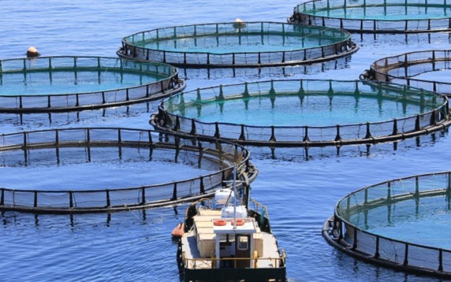 Acquacoltura biologica: il CREA presenta ad Aquafarm i risultati di un'indagine sui consumi nazionali