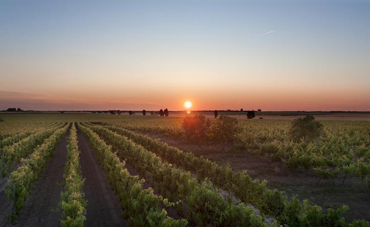 IL FUTURO SOSTENIBILE DELL'AGRICOLTURA
