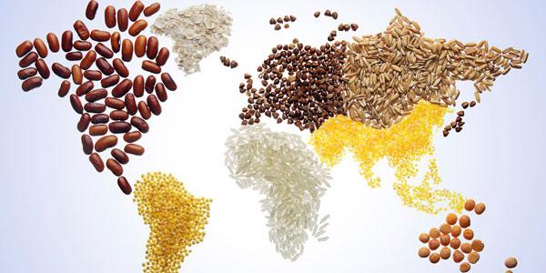 diete sane e gestione sostenibile del suolo per sconfiggere la fame e proteggere la terra