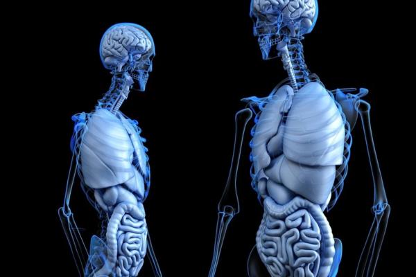 Le farfalle nello stomaco: il nostro cervello nell'intestino