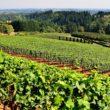 AGROALIMENTARE, SEGNALI DI RIPRESA POST COVID: IN CRESCITA PIL, INVESTIMENTI E CONSUMI