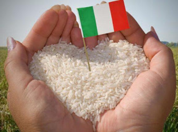 RISICOLTURA ITALIANA ED EUROPEA: IL PUNTO DELLA RICERCA SULLA SUA EVOLUZIONE
